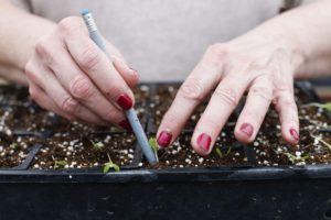 A woman plants vegetable seedlings in containers on March 14, 2016. An Iowa coalition will meet this week to address hunger and food insecurity among senior citizens.